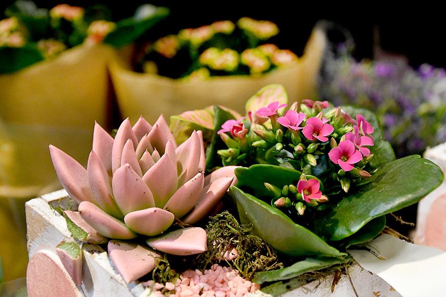 Blumen und Pflanzen im REWE
